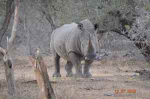 We stopped for sundowners one evening, not 20m away from this rhino. Ever done that? Sipped wine beside a rhinoceros?