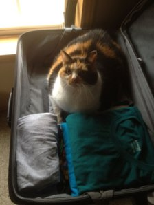 Callie-and-the-suitcase